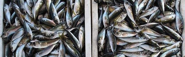 疲れ目に効果がある食品青魚